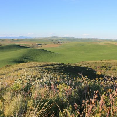 Bejeweled-floral diversity at Kramer Prairie in eastern Washington with spring wheat fields in the background