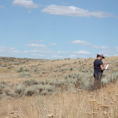 Pam Brunsfeld, Botanist on IE's Professional Roster, describing native flora in one of our Spalding's Catchfly sampling plots in the Channeled Scablands of eastern Washington