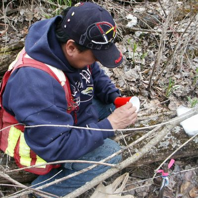 Kootenai Tribal Technician, Roland Caprio, prepares a pitfall trap in the riparian zone of the Kootenai floodplain