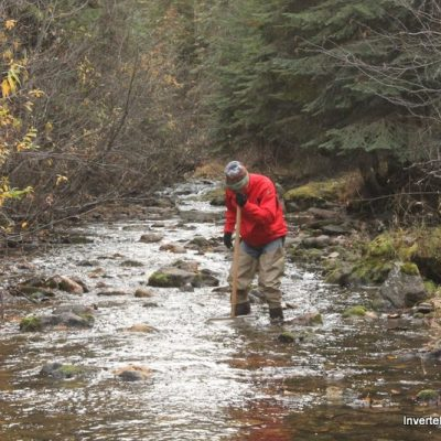 Wade Hoiland (ID Taxonomist) sampling stream with D-net.